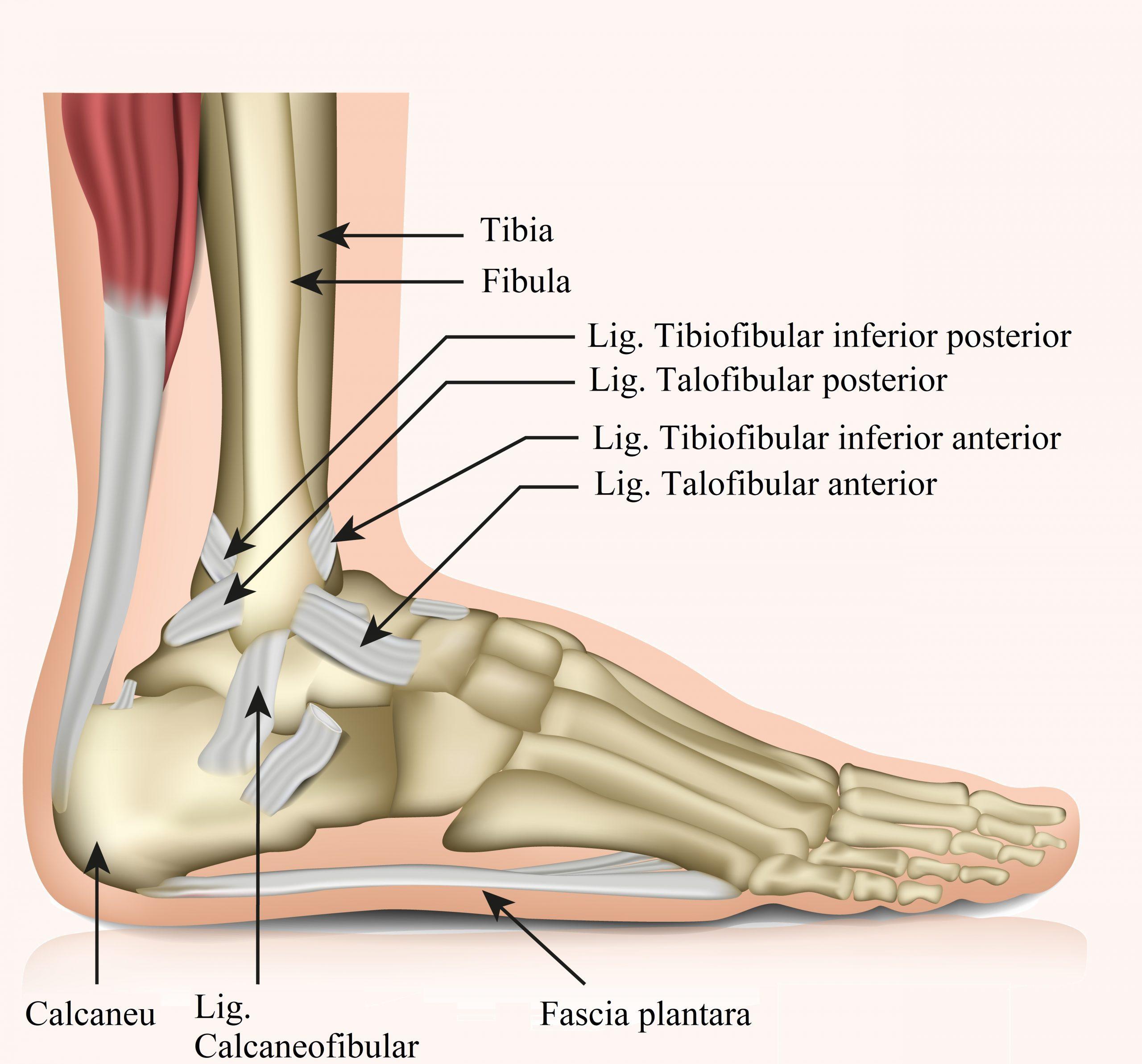 signul extern al piciorului